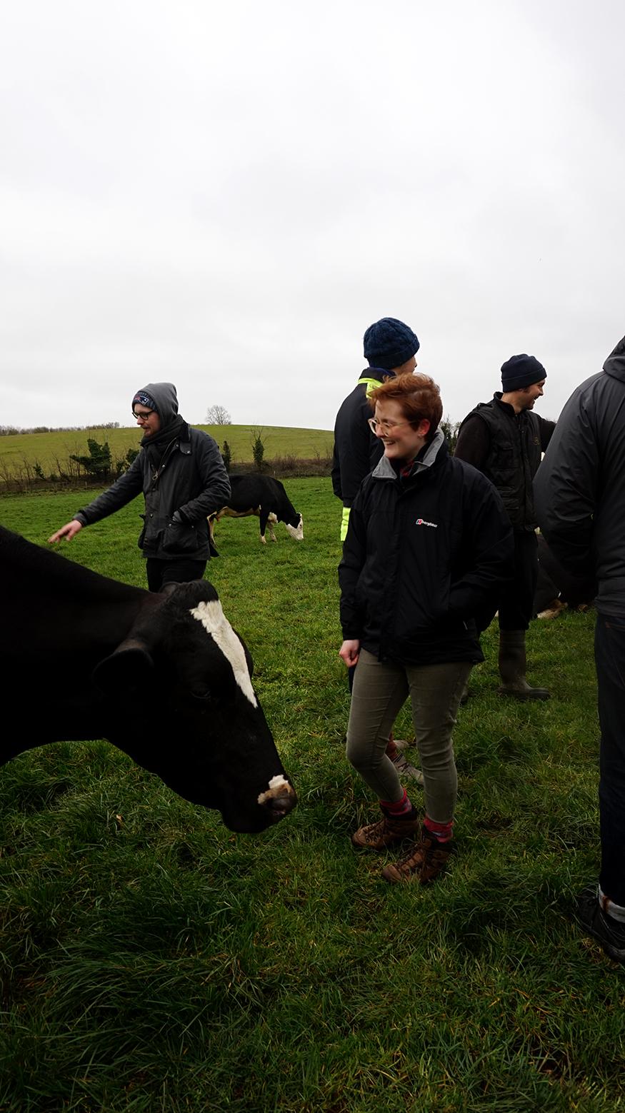 Field Visit Fen Farm Cows web.jpg
