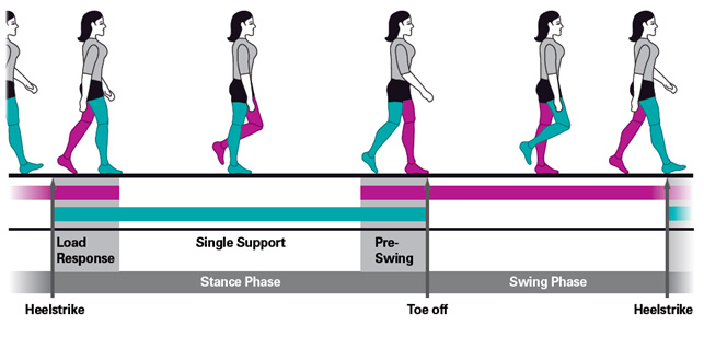 human gait analysis during walk and Keywords- human locomotion gait analysis feature extraction  normal  walking in humans may be defined as a method of locomotion involving the use  of two.