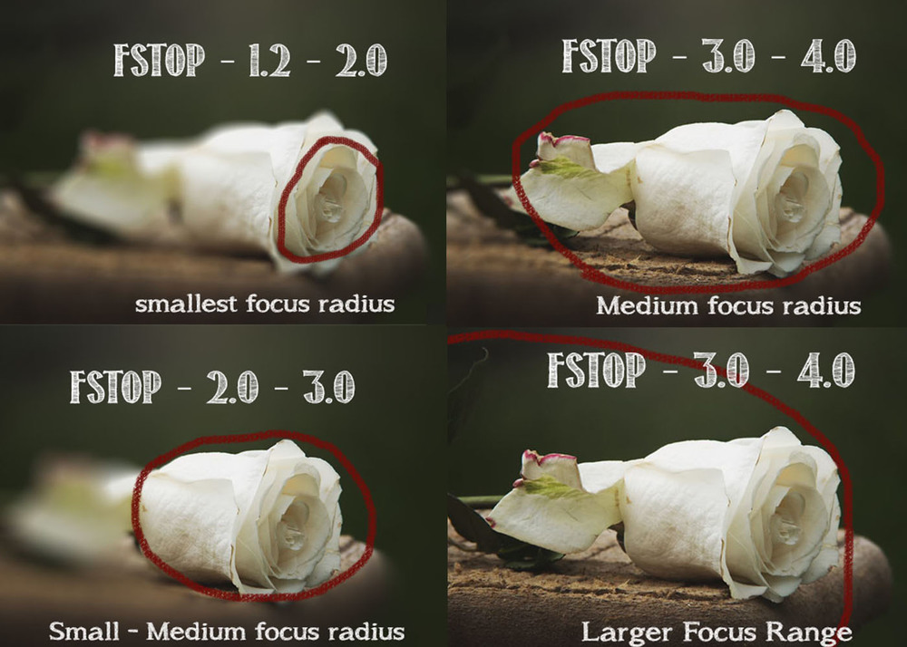For demonstration purposes ... Just to give you an idea of how Fstop works..  You can see how changing Fstop changing how much around your subject is in focus.