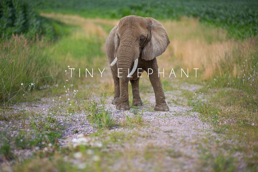 tiny elephant.jpg