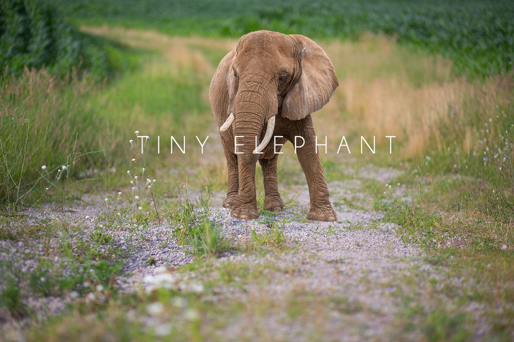 warm elephant.jpg