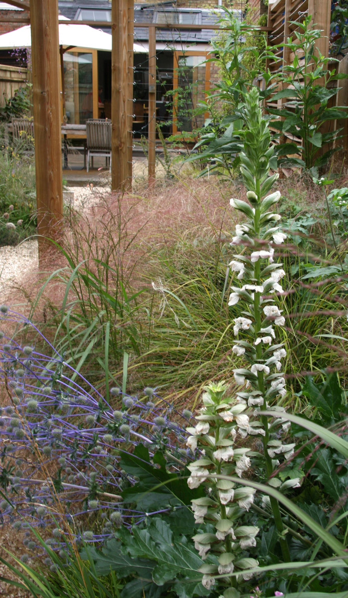 rogue_designs_oxford_garden_design (8).jpg