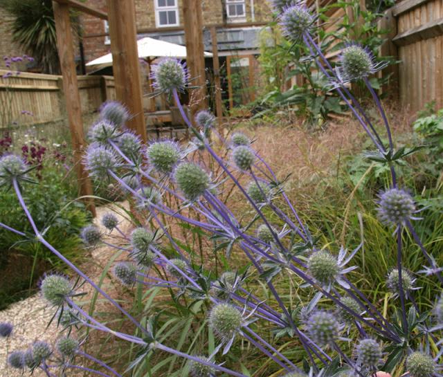 garden-design-6-rogue.png
