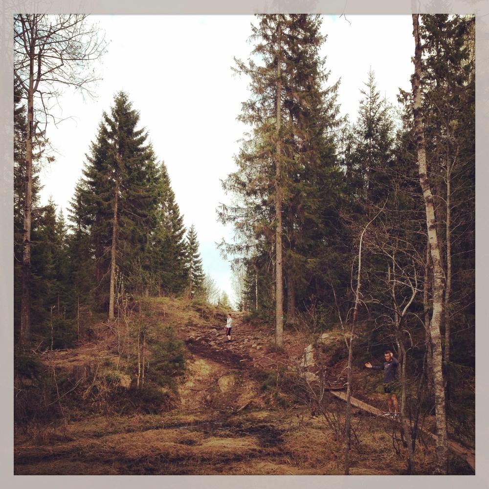 Vårmyr - gress og torv er ikke helt på den grønne delen av skalaen enda, men det er resten av skogen :) Foto: @LettLabb (instagram)
