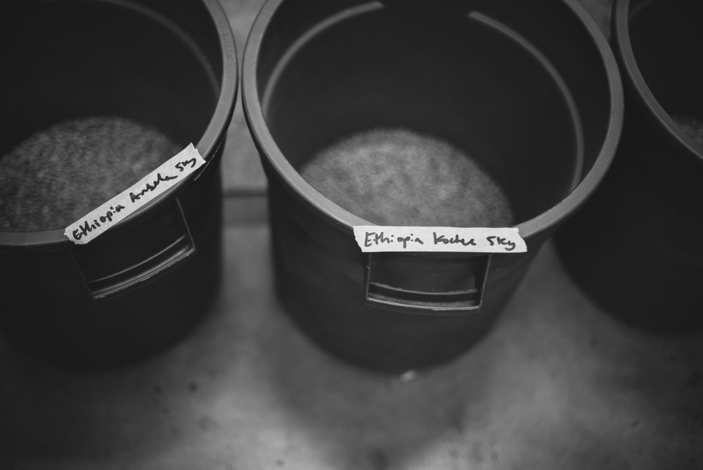 Green coffee beans in bins awaiting roasting
