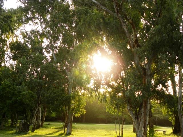 Dappled shade