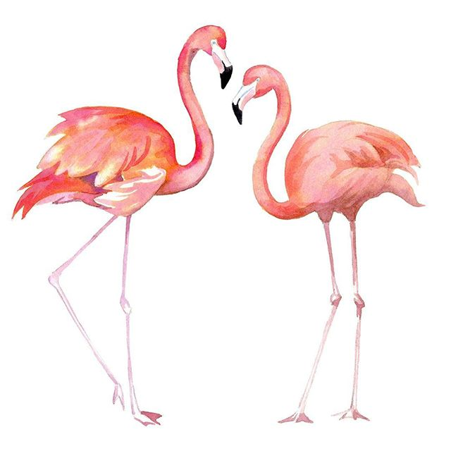Happy Valentines Day! 💕 • • • • #valentinesday #flamingo #tropical #loveatfirstsight #watercolor #illustration #weddinginvitations #invitationdesign #artistsoninstagram #birdillustration #animalportraits #emilybakerstudio