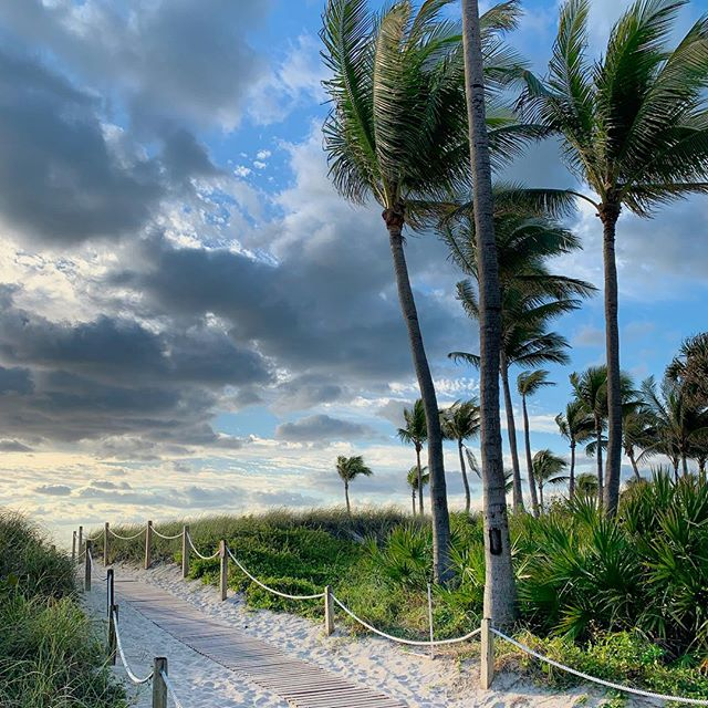 • • • #miami #miamibeach #beachrun #palmtree #boardwalk #ocean #seascape #florida #travelphotography #emilybakerstudio