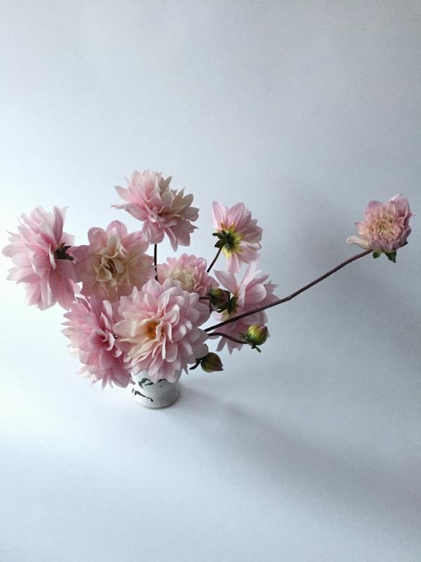 FLOWER MILES: 30 |VASE LIFE: 3+ DAYS
