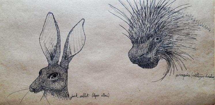 Jack Rabbit & Porcupine