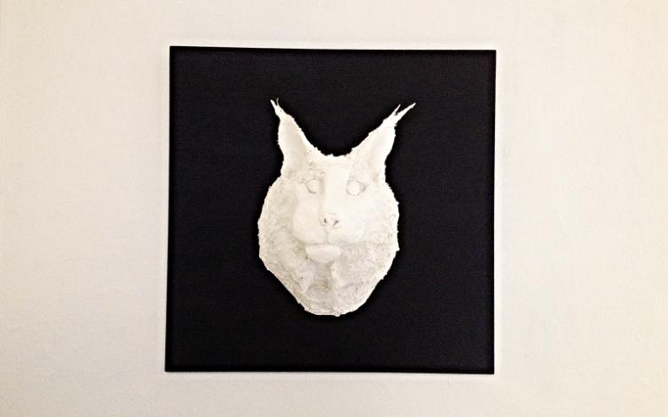 Eartha (Lynx canadensis)