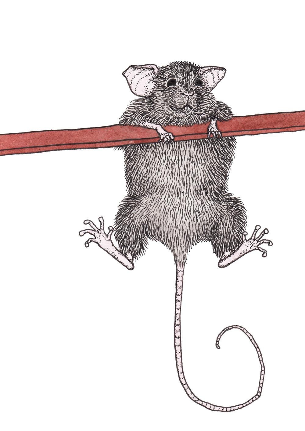 Mouse + Edge