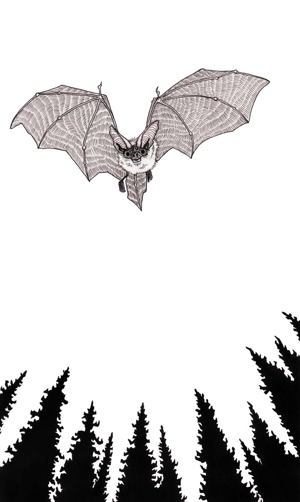 Bat + Trees
