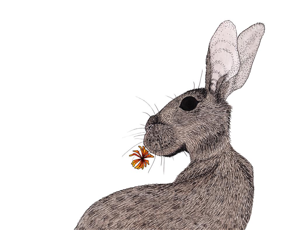 Rabbit + Flower