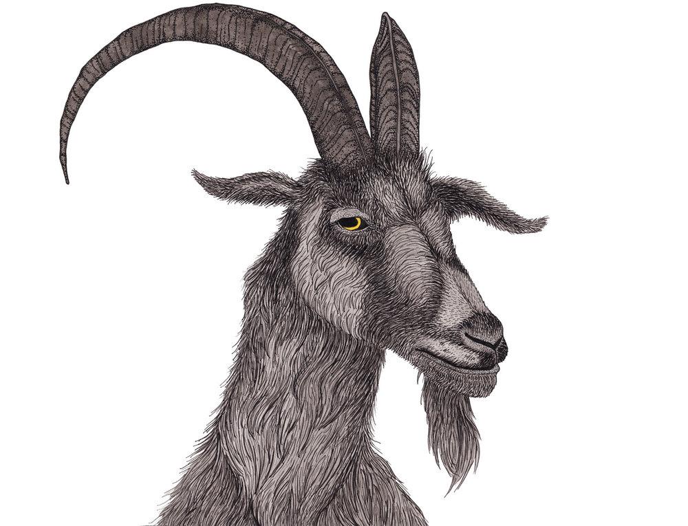 goat-black-phillip-illustration-matthew-woods.jpg