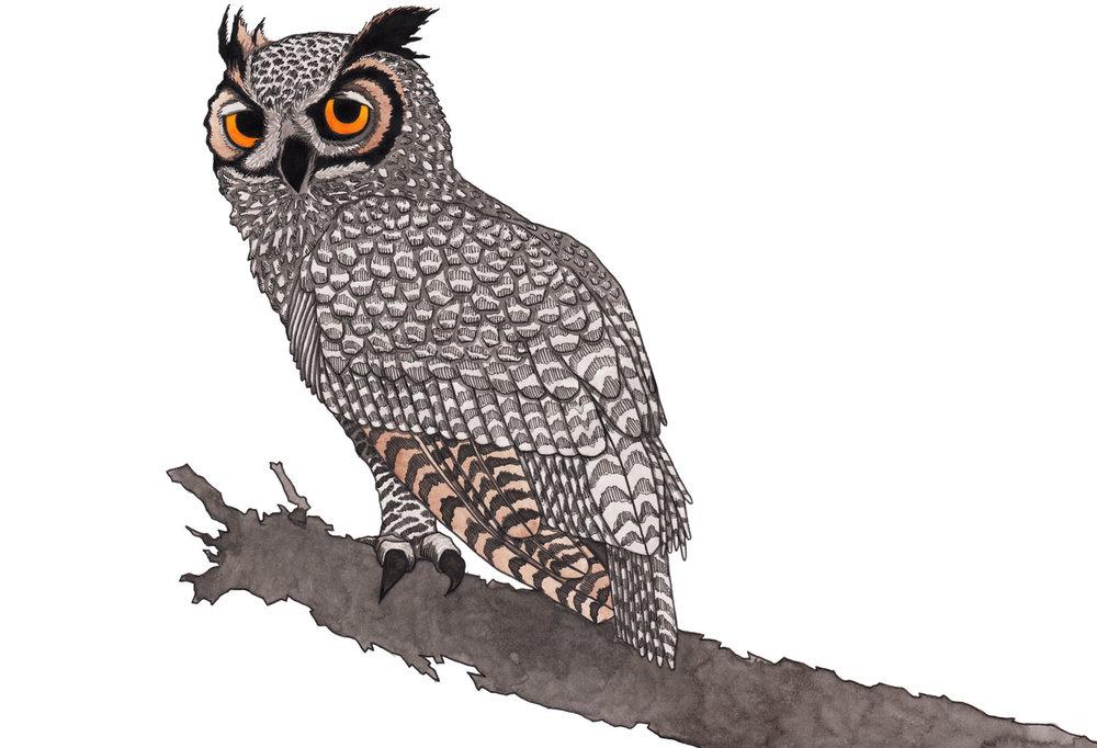 horned-owl-yellow-eyes-illustration-matthew-woods.jpg