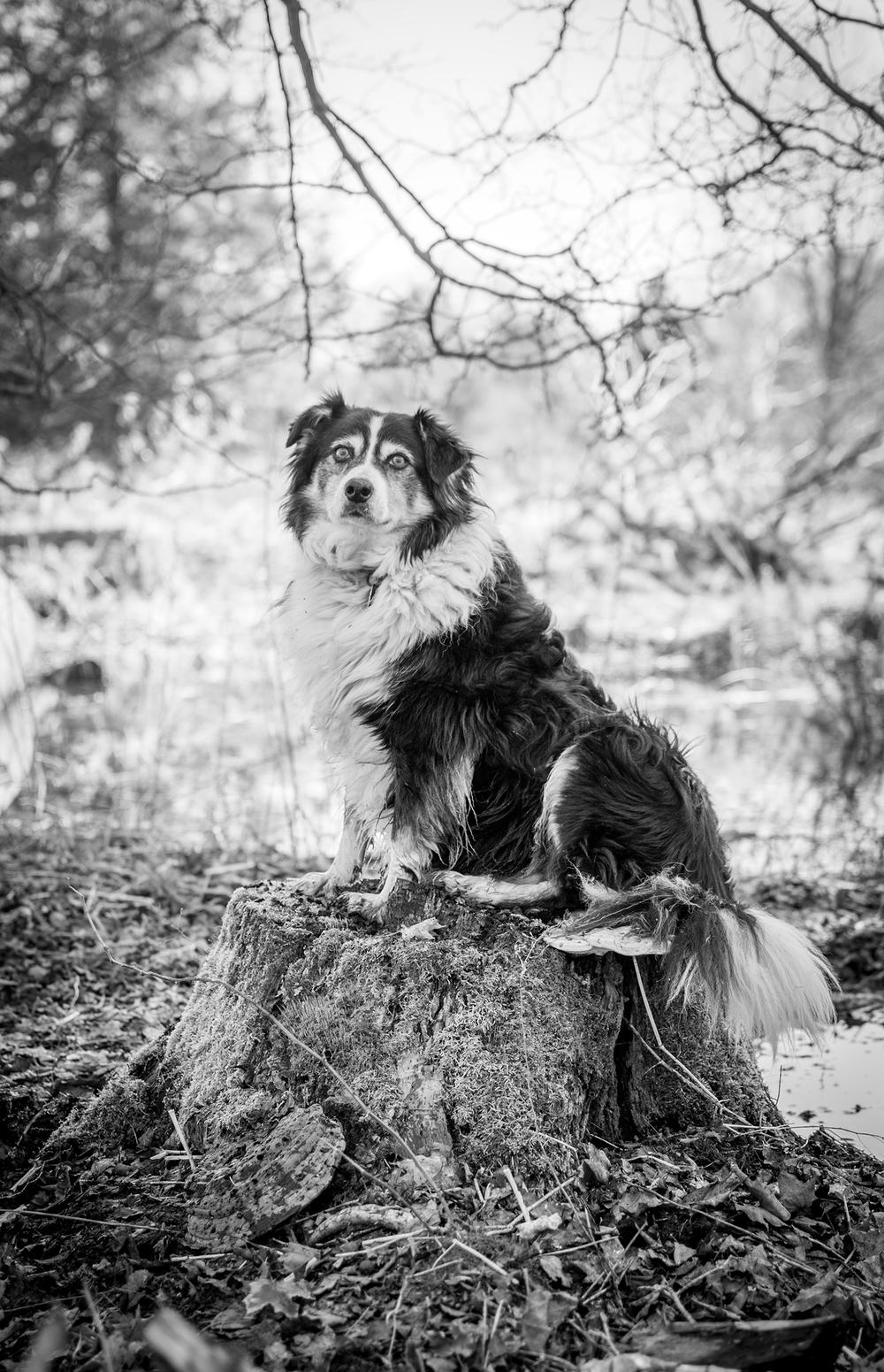 wyoming pet photography