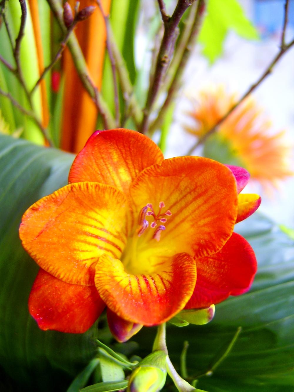 flower-08.jpg