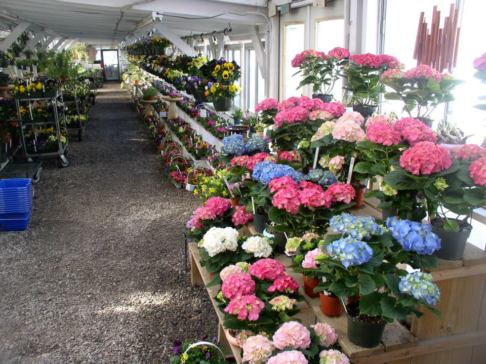 Hydrangeas in pinks, blues and whites.