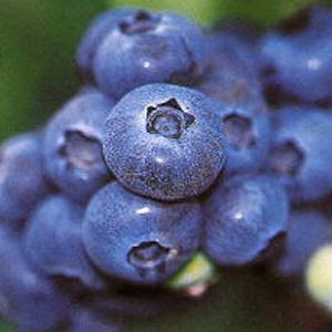 blueberry8.jpg