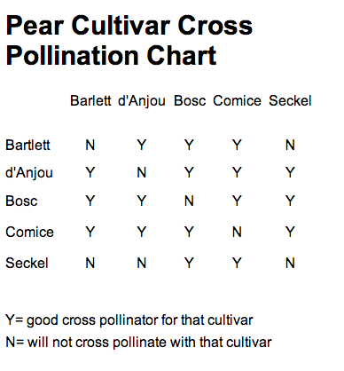 Pear Cultivar Cross Pollination Chart