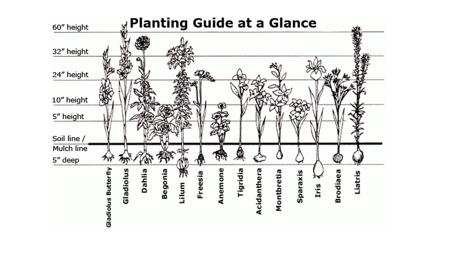 Planting guide at a glance