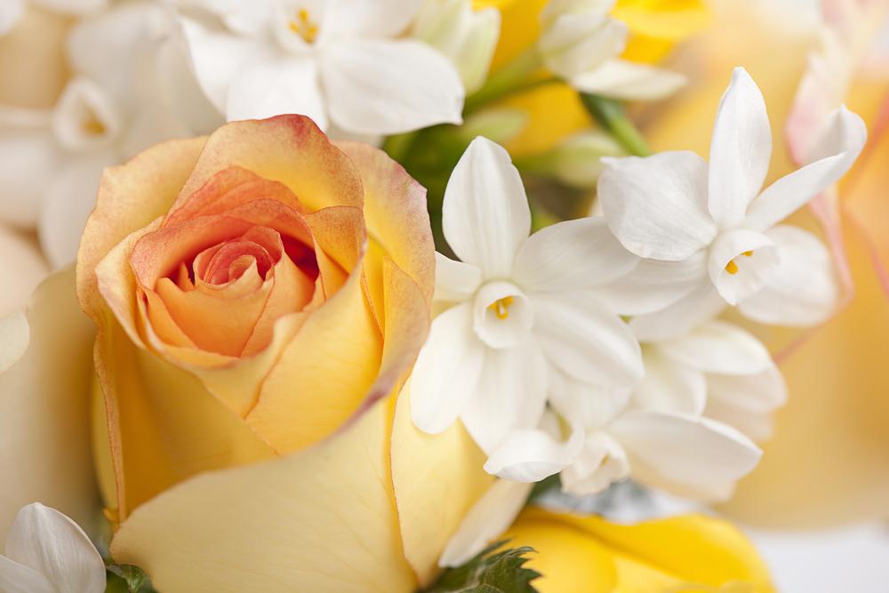 Flower Rose June 13326693_Full.jpg
