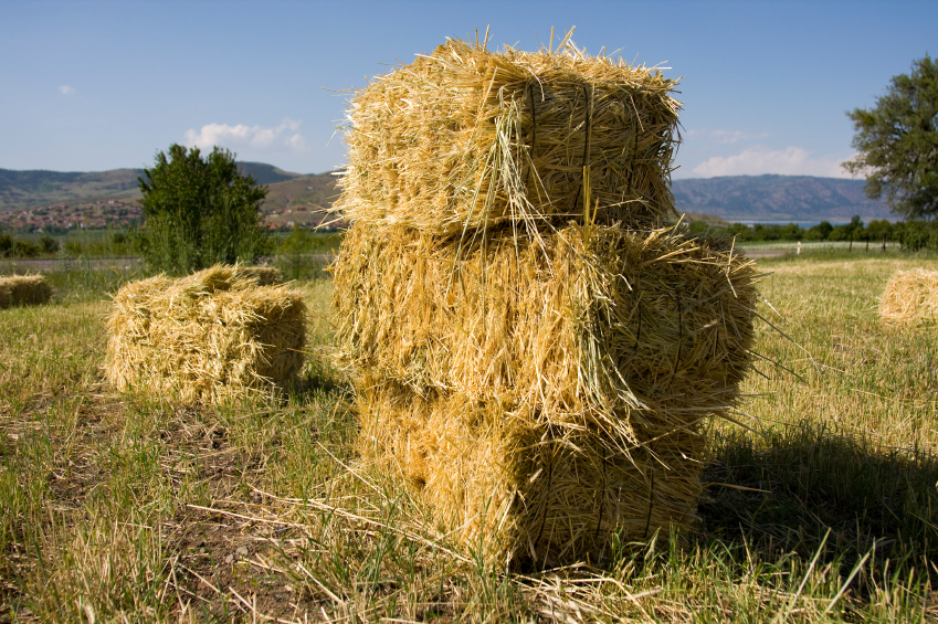 Fall Hay bale 9607379_Small.jpg