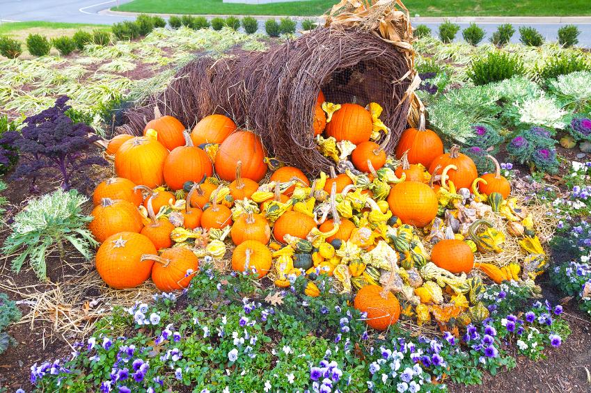 Halloween Pumpkins 75405403_Small.jpg