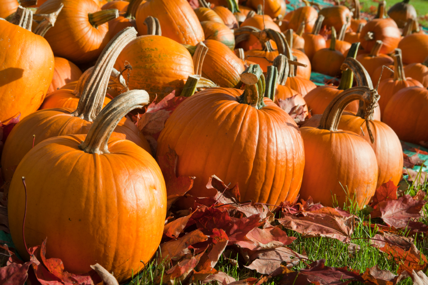 Pumpkins Fall Halloween 13688427_Small.jpg