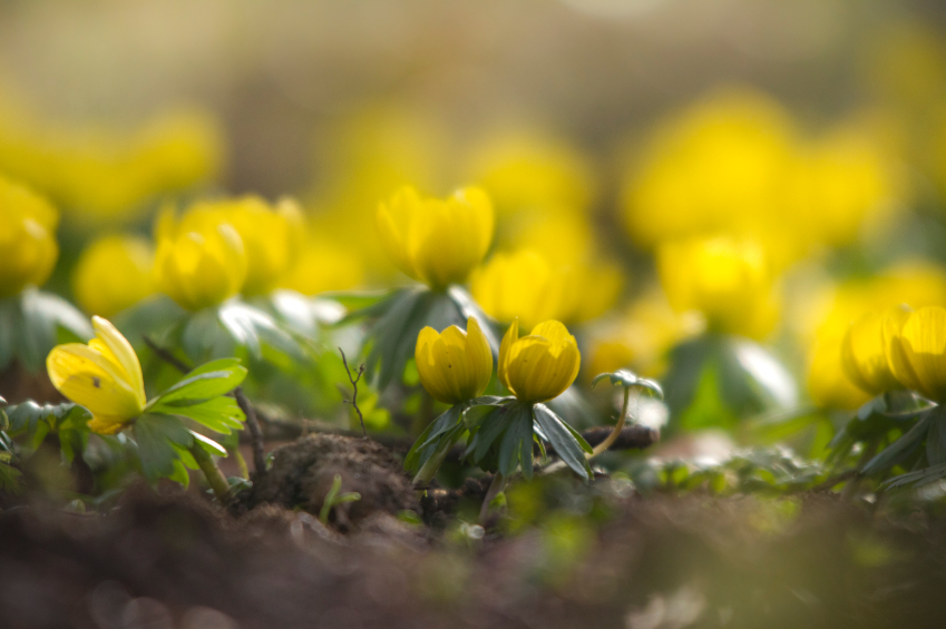 Flowers winter 61753096_Small.jpg