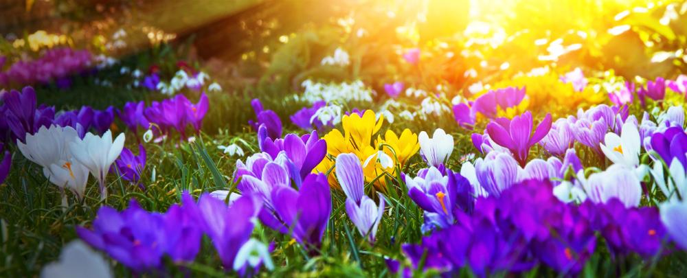 Flowers Spring 85186451_Small.jpg