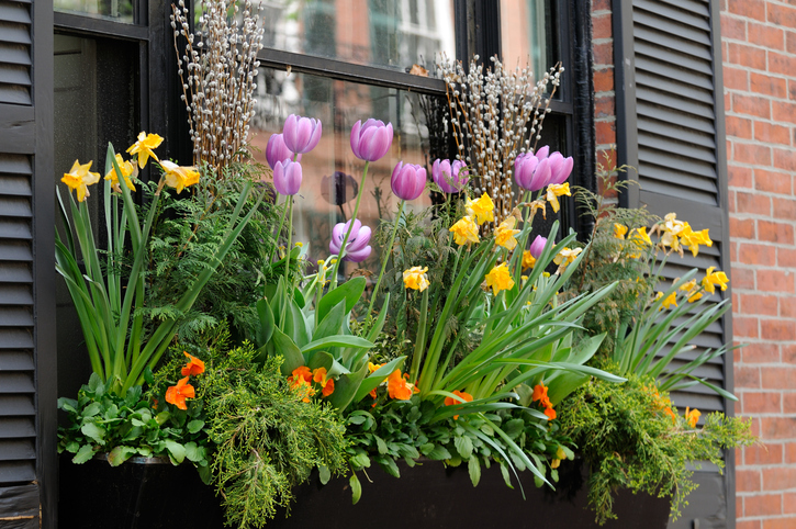 Window-Box-Flower-Arrangement-131543849_726x482.jpeg