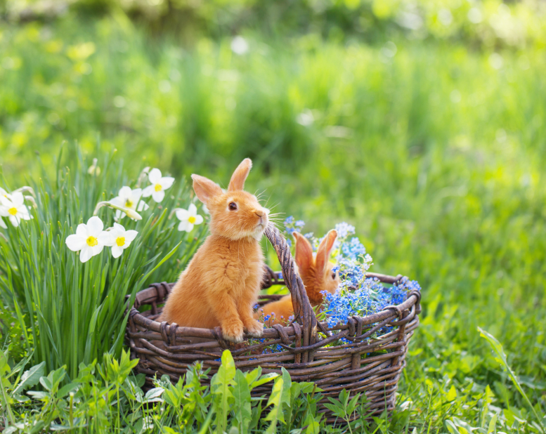 Easter bunny Spring Flowers 83623769_Small.jpg