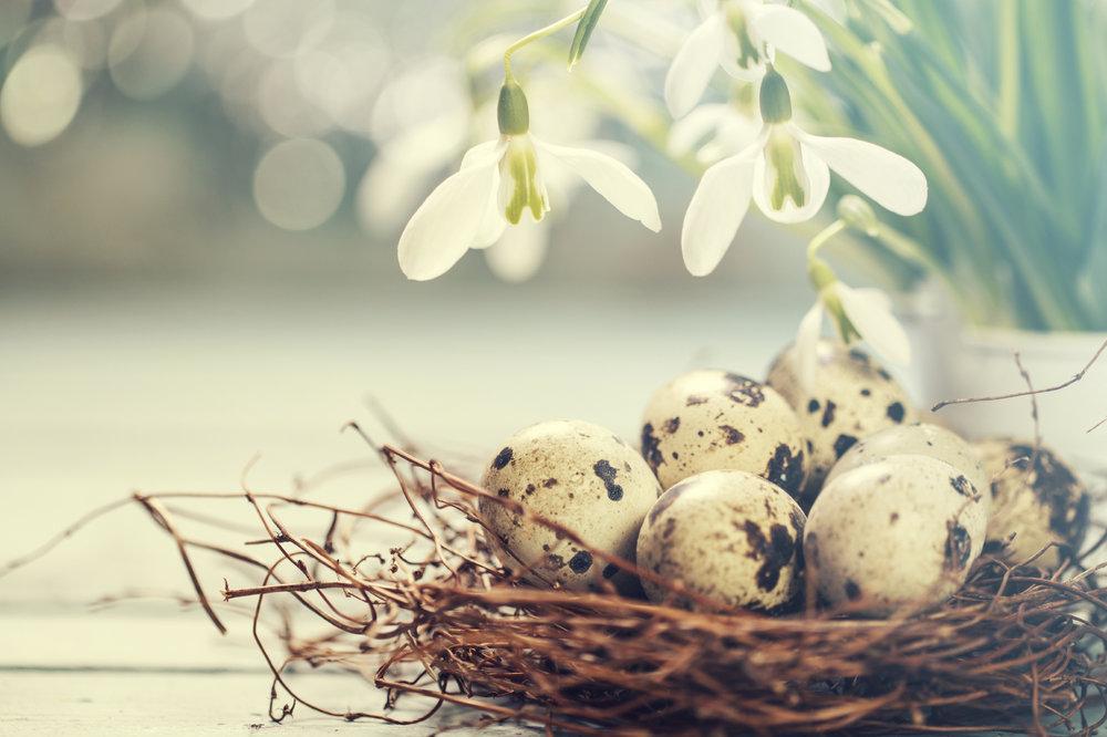 Easter eggs 86997831_Medium.jpg