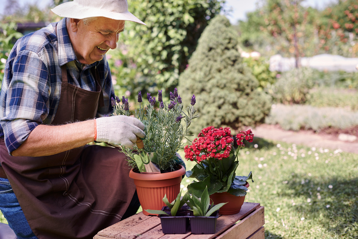 Senior-man-replanting-flowers-and-herbs-483270598_727x484.jpeg