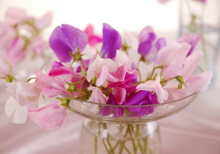 Sweet-peas-flower-479426508_709x497.jpeg