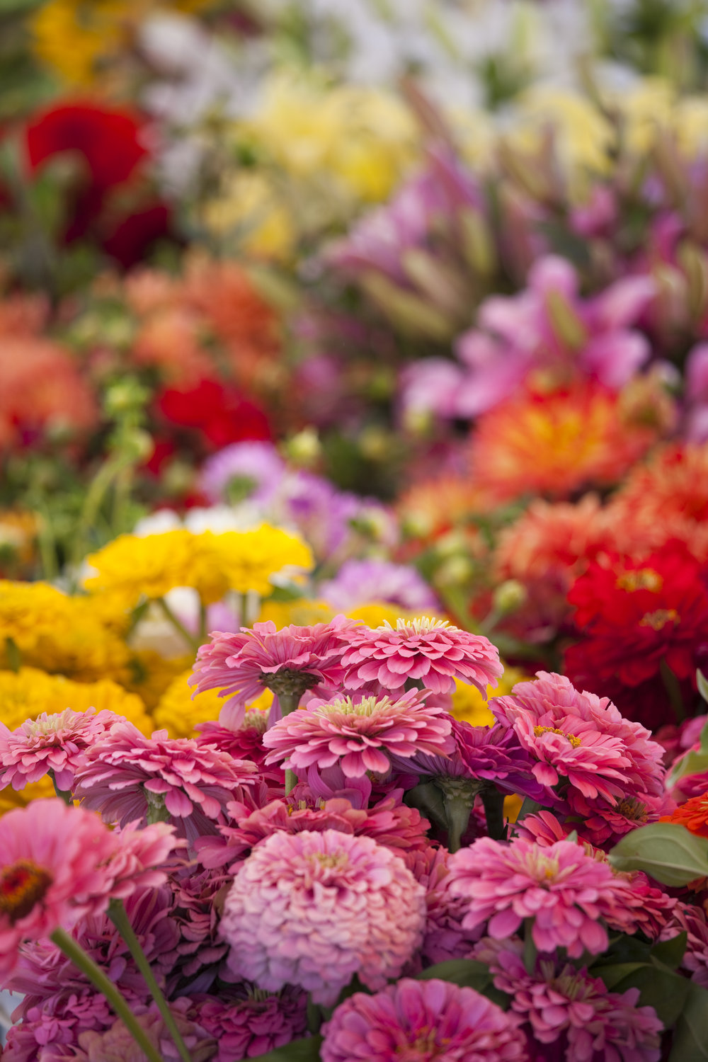 Fresh-Spring-Bouquet-of-Flowers-at-Farmers-Market-182446786_3744x5616.jpeg