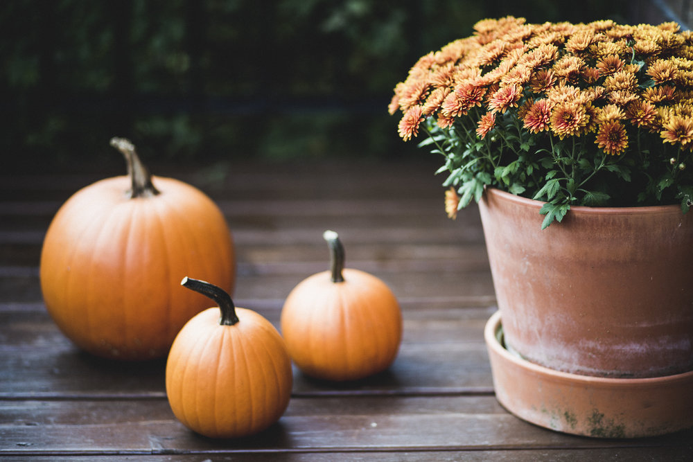 Pumpkin-and-orange-flowers-on-a-porch-during-Halloween-860536982_5760x3840.jpeg