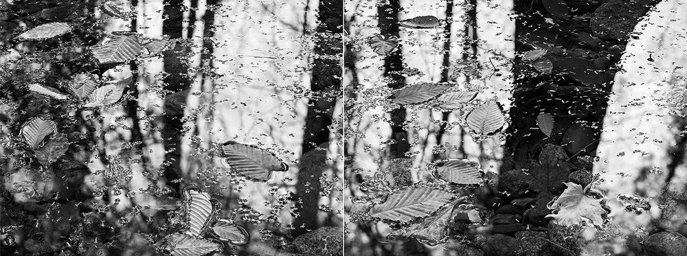 2008-Trunk-Leaves-Diptych.jpg