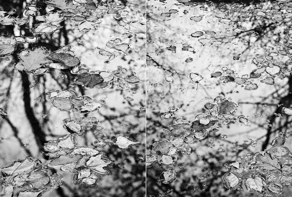 2008-Leaves-Floating-Diptych.jpg