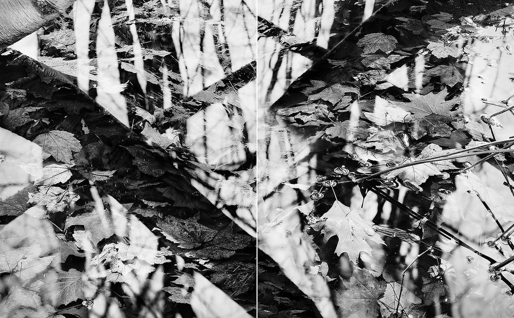 Leaves & Branches Diptych