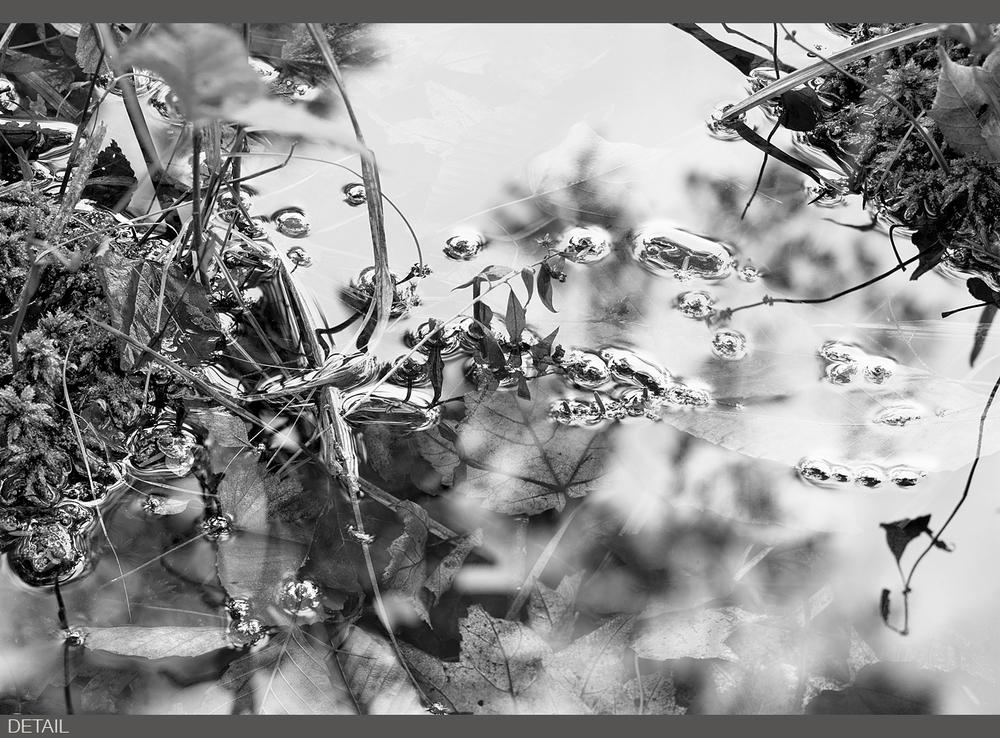 Grass Fresh Rain DT.jpg