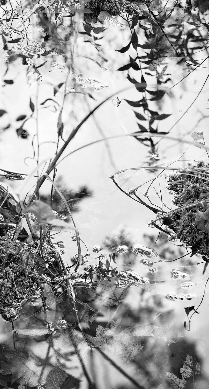 Grass Fresh Rain.jpg