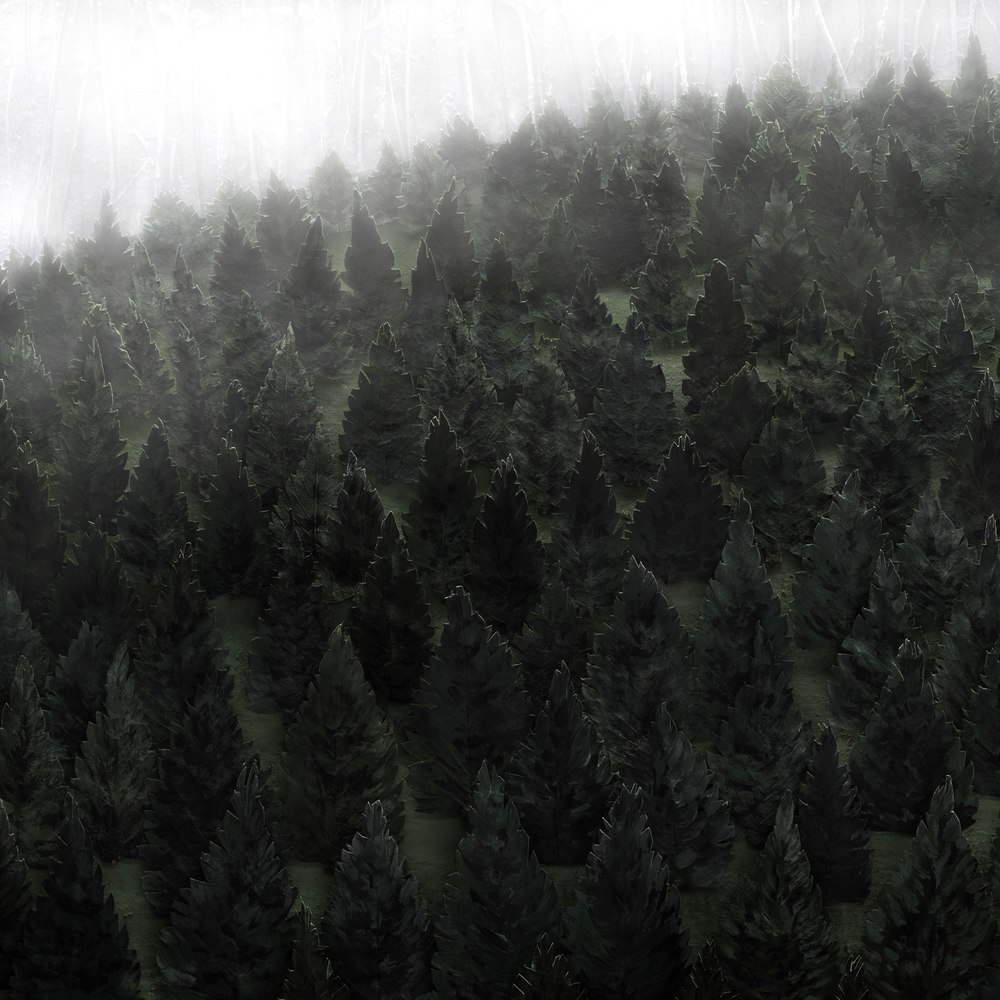 "Pine Barren no. 1,  Archival Ink Jet Print, 20"" x20"", 2015"