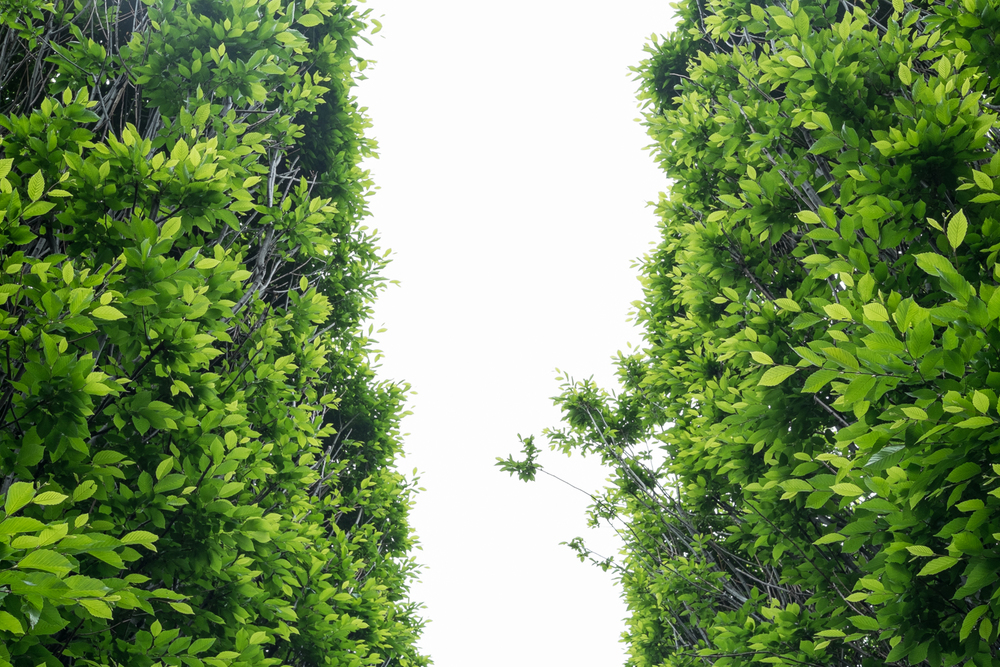 Dia Trees
