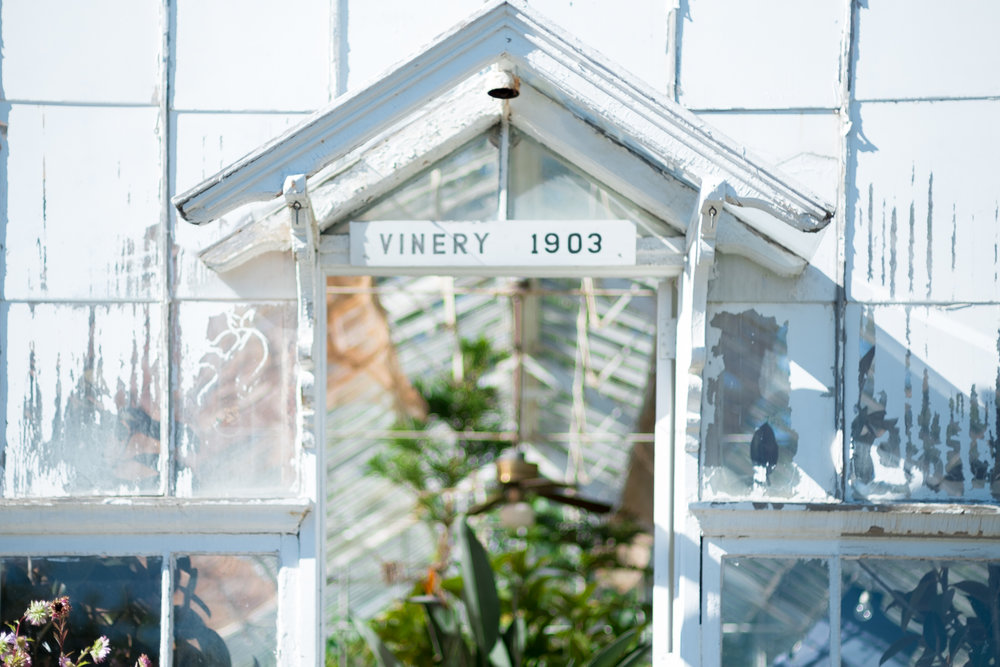 The Vinery was one of the earliest additions to the greenhouses at Sonnenberg
