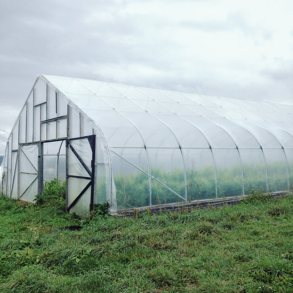 Greenhouse at Good Life Farm