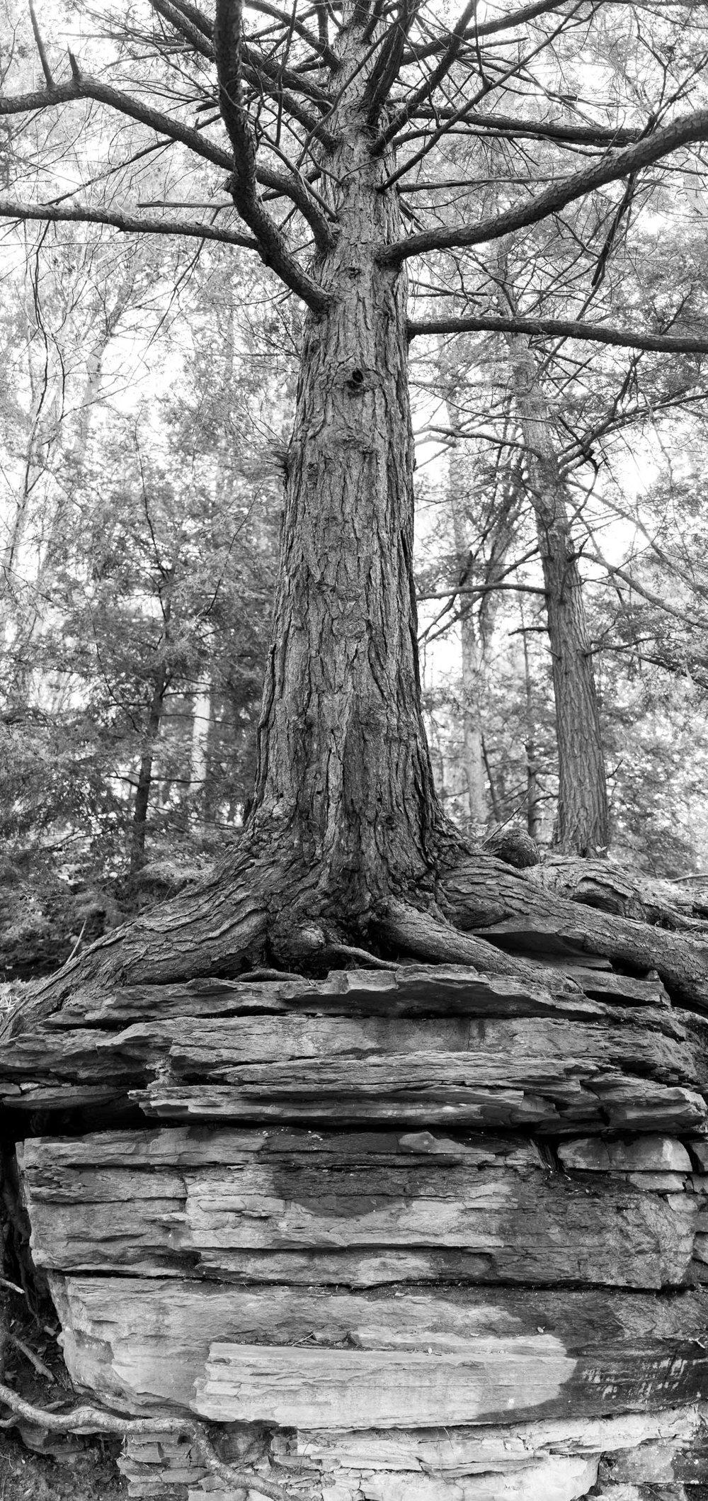 Tree_Pose.jpg