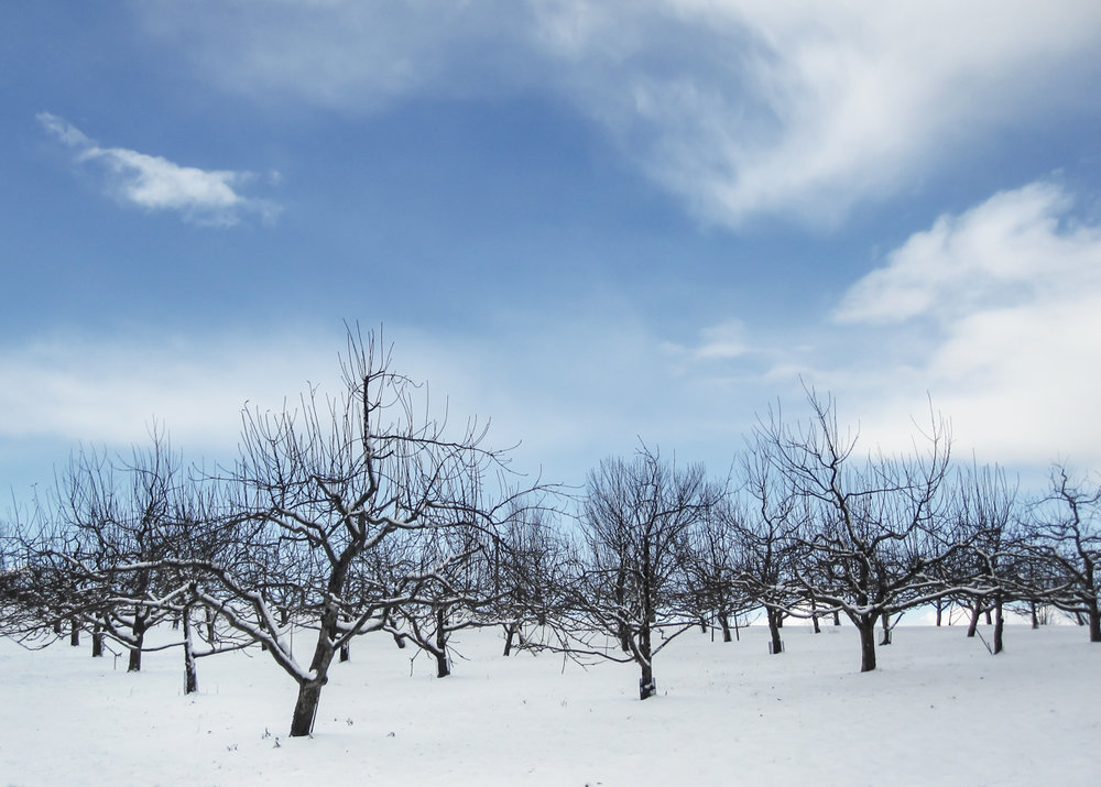 Winter Orchard (1 of 1).jpg